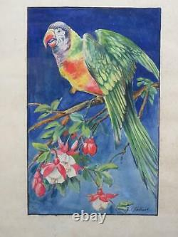 Antique Parrot Paintings 1930s French Pair Wildlife Art Signed Research
